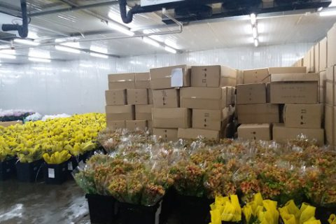 上海芬尚科技35000立方米大型鲜花阴凉库工程案例