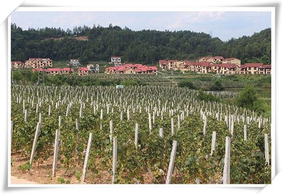 巴中市葡萄种植专业合作社200吨葡萄气调保鲜库工程