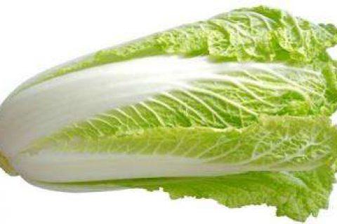 如何利用保鲜冷库贮藏保鲜大白菜