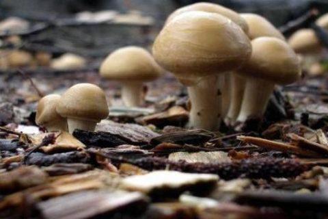 香菇冷库造价多少钱一平方?香菇怎么储藏保鲜?