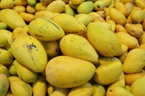 芒果冷库保鲜技术,芒果储存最久的方法