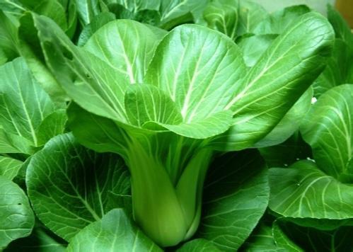 绿色蔬菜冷库储存方法及温度要求介绍
