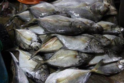 15平米的海鲜冷库造价需要多少钱?