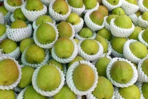 梨子长期保鲜储藏方法——梨子气调保鲜库