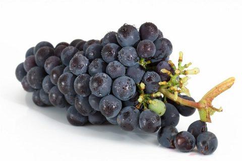 葡萄冷库保鲜技术,葡萄保存时间长达半年