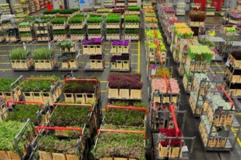 做一个100平方鲜花保鲜冷库需要多少钱成本?