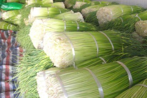 蒜苔冷库保鲜技术,蒜苔最长的储存方法介绍