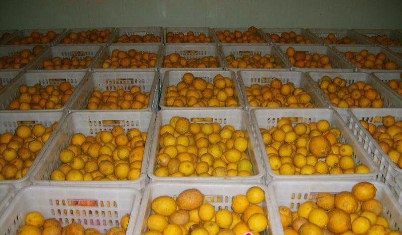 南充600平米水果保鲜库造价表,南充柠檬保鲜库安装报价清单参考