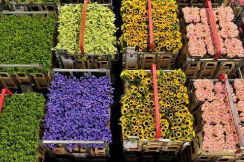 建个鲜花冷库多少钱?鲜花冷库一平方造价多少钱?
