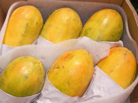 木瓜怎么保存不会烂?——木瓜冷库贮藏保鲜技术推荐