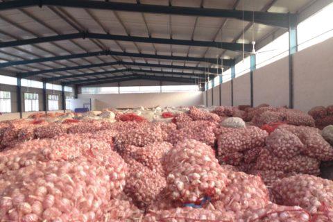 建造储存100吨大蒜的冷库造价多少钱?