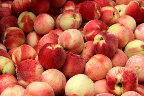 水蜜桃冷库保鲜技术,水蜜桃保存最久的储存方法