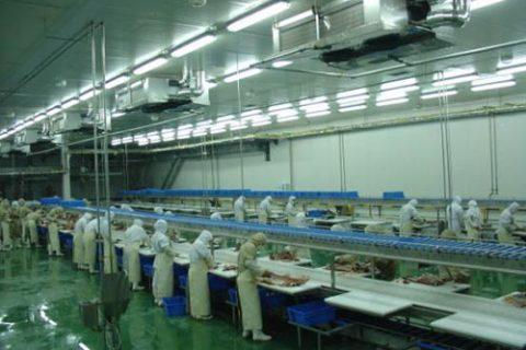 造一个畜禽屠宰场冷库要多少钱?