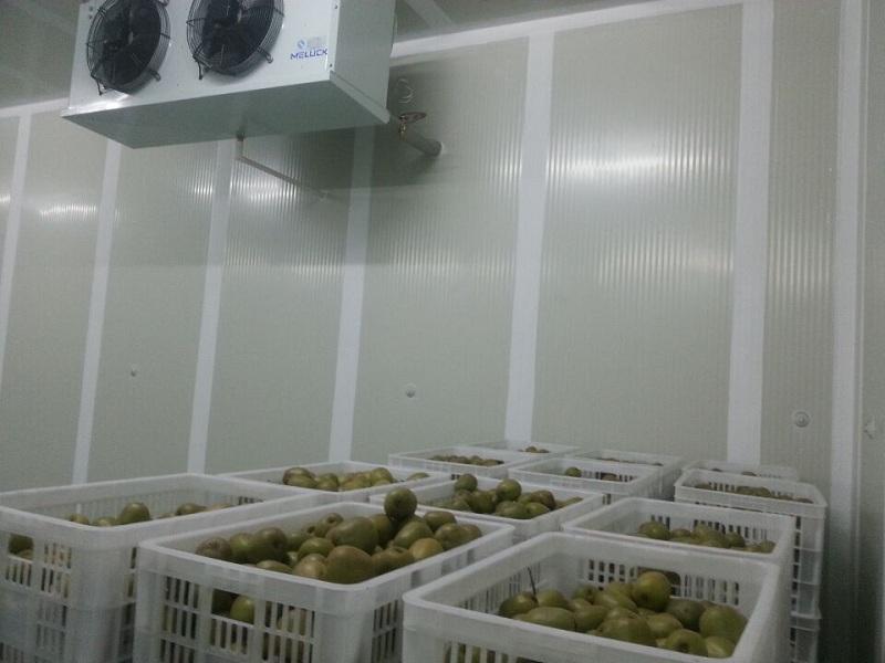 猕猴桃水果保鲜库实拍
