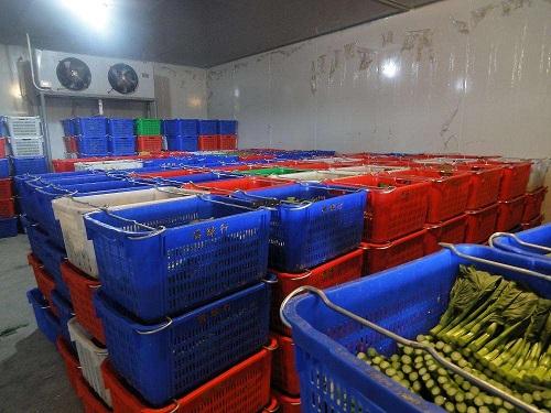 蔬菜保鲜库实拍