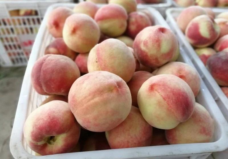 建造一个桃子保鲜冷库需要多少钱?