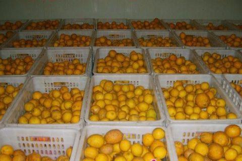 建造柠檬冷库要多少钱一立方?