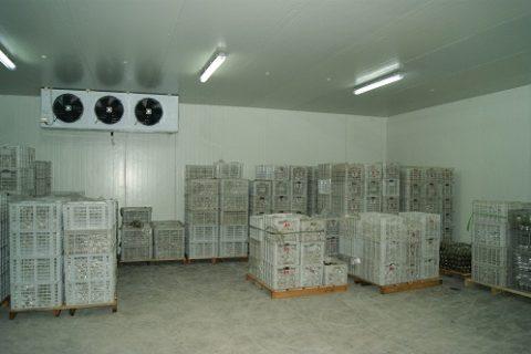 建贮藏五万斤水果的保鲜库得多少钱