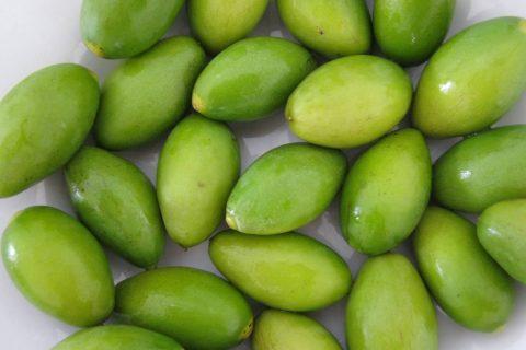 橄榄果怎么储存好?冷库贮藏橄榄果60天依旧新鲜