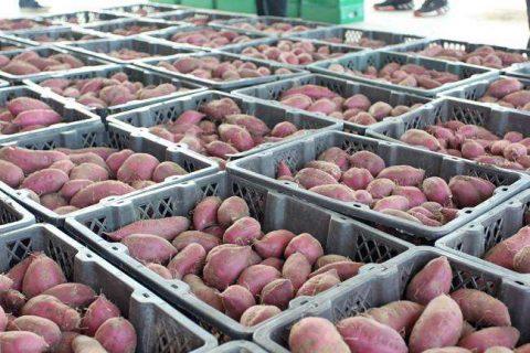 50吨红薯保鲜库造价要多少钱?