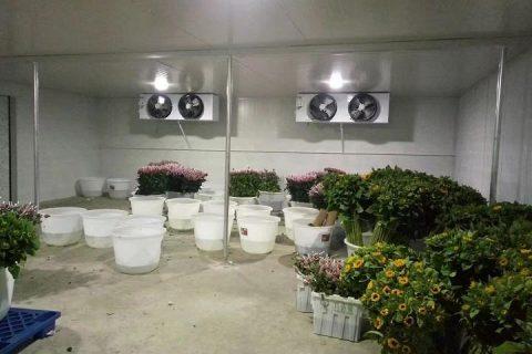 建一个鲜花保鲜库房要多少钱?