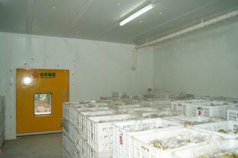 建一个储存20万斤水果的冷库需要多钱?