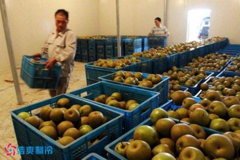 建造20万斤的梨子保鲜库需要多少钱?