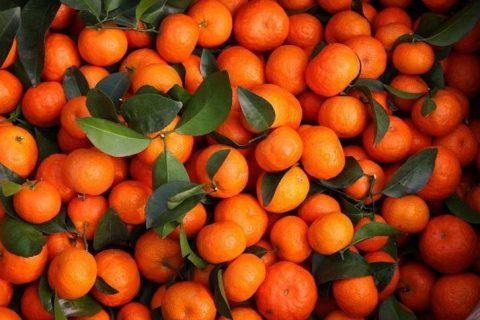 建造个砂糖橘保鲜库需要多少钱?