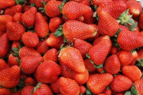 草莓可以放在冷库里储藏吗?草莓能保存多久?