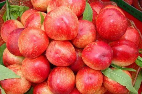 油桃毛桃可以放冷库里储存吗?油桃和毛桃能保存多久?