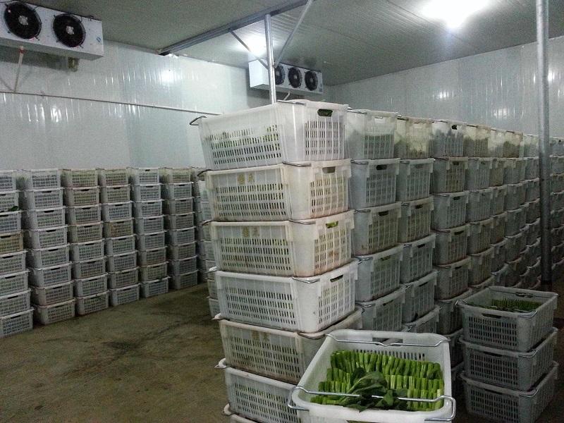 图为绿叶蔬菜保鲜库内部实拍