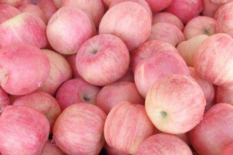 山东烟台某大型苹果冷库内部实拍视频