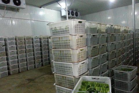 蔬菜恒温冷库造价多少钱一平方?