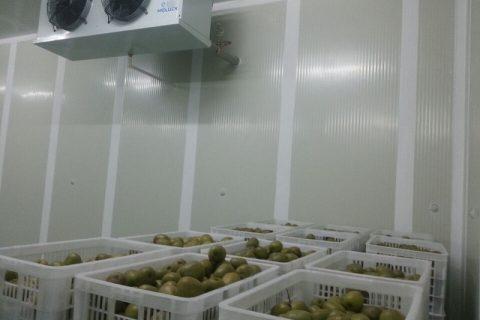 [视频]猕猴桃气调库和普通保鲜库有什么区别?小编带你看看气调库的保鲜效果