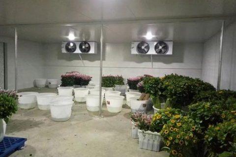 成都30立方小型鲜花保鲜冷库工程设计建造方案