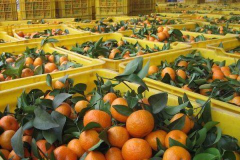柑橘怎么保鲜时间长?柑橘保存方法介绍
