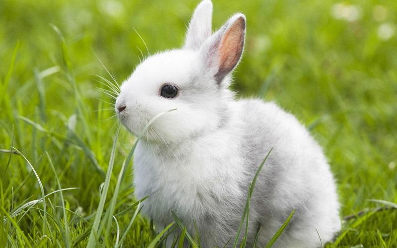兔肉放冷库可以储存多久?温度要求是多少?