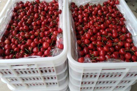 樱桃冷库建造价格要多少钱?