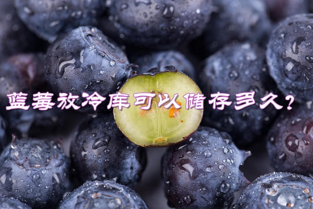 蓝莓放冷库可以储存多久?最佳冷库贮藏温度是多少?